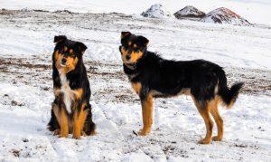 dog-1052756